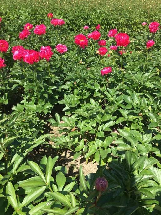 hotspot, blog, foodblog, uitje, kruiningen, bloemen, pluktuin, natuurlijk, natuurlijke hotspot, natuur, biologisch, biologische hotspot, biologische foodblog, organic happiness